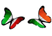Concept - two butterflies with Italian and Irish flags flying — Stock Photo