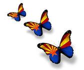 Three Arizona flag butterflies, isolated on white — Stock Photo