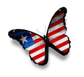 Liberia flag butterfly, isolated on white — Stock Photo