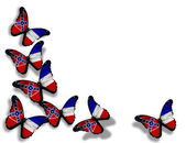 Mississippi flag butterflies, isolated on white background — Stock Photo