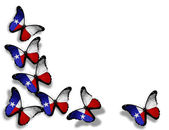Texas flag butterflies, isolated on white background — Stock Photo