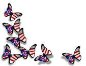 Mariposas de bandera de ohio, aisladas sobre fondo blanco — Foto de Stock