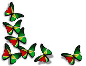 Guyana flag butterflies, isolated on white background — Stock Photo