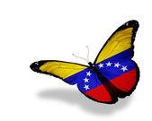 Venezolanischer flagge schmetterling fliegen, isolierten auf weißen hintergrund — Stockfoto
