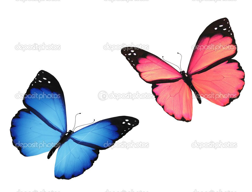 Pink and blue butterfly pictures