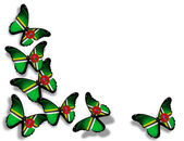 Mariposas de bandera de dominica, aisladas sobre fondo blanco — Foto de Stock
