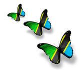 Three Tanzania flag butterflies, isolated on white — Stock Photo