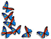 Democratic Republic of the Congo flag butterflies, isolated on w — Stock Photo