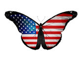 American flag butterfly flying, isolated on white background — Stock Photo