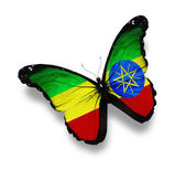 Gabonese flag butterfly, isolated on white — Stock Photo