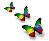 Three Ethiopia flag butterflies, isolated on white — Stock Photo
