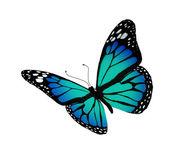 Farfalla turchese, isolato su sfondo bianco — Foto Stock