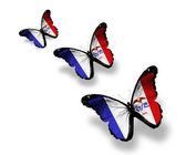 Tre iowa flagga fjärilar, isolerad på vit — Stockfoto