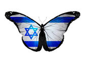 Israeli flag butterfly flying, isolated on white background — Stock Photo