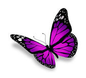 Violet butterfly, isolated on white background — Stock Photo