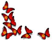 キルギスの旗蝶、白い背景で隔離 — ストック写真