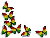 Bolivian flag butterflies, isolated on white background — Stock Photo