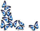 Mariposas de la bandera escocesa, aisladas sobre fondo blanco — Foto de Stock