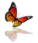 Beyaz arka plan üzerinde izole turuncu kelebek — Stok fotoğraf