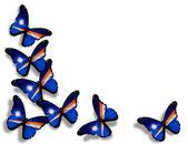 бабочки флаг маршалловы острова, изолированные на белом фоне — Стоковое фото