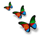 Three Eritrea flag butterflies, isolated on white — Stock Photo
