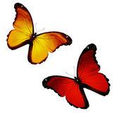 Dwie żółte, czerwone pływające, na białym tle na białym tle — Zdjęcie stockowe