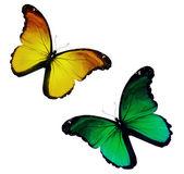 Deux vert jaune, flying, isolé sur fond blanc — Photo