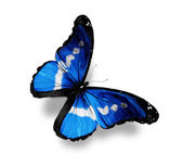 Dark blue butterfly morpho, isolated on white — Stock Photo