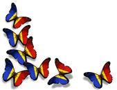 Papillons de drapeau moldave, isolés sur fond blanc — Photo