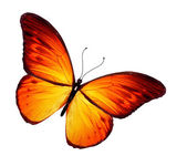 Orange butterfly, isolated on white background — Foto Stock