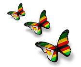 Trzy motyle flaga zimbabwe, na białym tle — Zdjęcie stockowe