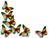 Zimbabwe flag butterflies, isolated on white background — Stock Photo