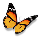 Orange butterfly, isolated on white — Stock Photo
