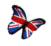 English flag butterfly flying, isolated on white background — Stock Photo