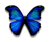 Morpho blå fjäril, isolerad på vit — Stockfoto