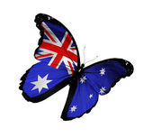 Australian flag butterfly flying, isolated on white background — Stock Photo