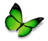 Green butterfly flying, isolated on white background — Stock Photo