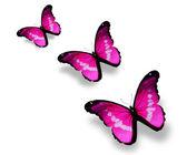Tři fialové motýly, izolované na bílém — Stock fotografie