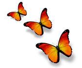Three orange butterflies, isolated on white — Stock Photo