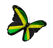 Jamaican flag butterfly flying, isolated on white background — Stock Photo