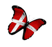 Danish flag butterfly flying, isolated on white background — Stock Photo