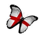 英語フラグ蝶の飛行に孤立した白い背景 — ストック写真