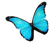 Blue butterfly on white background — Stock Photo