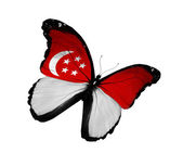 Singaporean flag butterfly flying, isolated on white background — Stock Photo