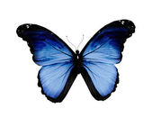Grunge blue butterfly, isolated on white — Stock Photo