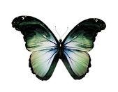 Grunge grön fjäril flyger, isolerade på vit — Stockfoto