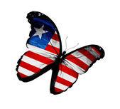 Mariposa de bandera de liberia volando, aislado sobre fondo blanco — Foto de Stock