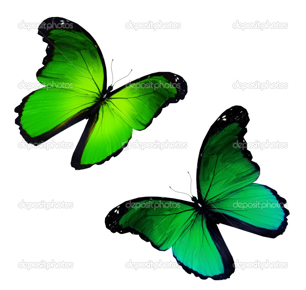 Two yellow green flying, isolated on white background — Stock Photo #11884079