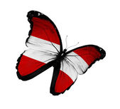 Austrian flag butterfly flying, isolated on white background — Stock Photo