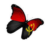 Angolská vlajka motýl létání, izolované na bílém pozadí — Stock fotografie